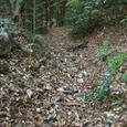 朴の葉の坂