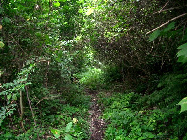 裏山トレール