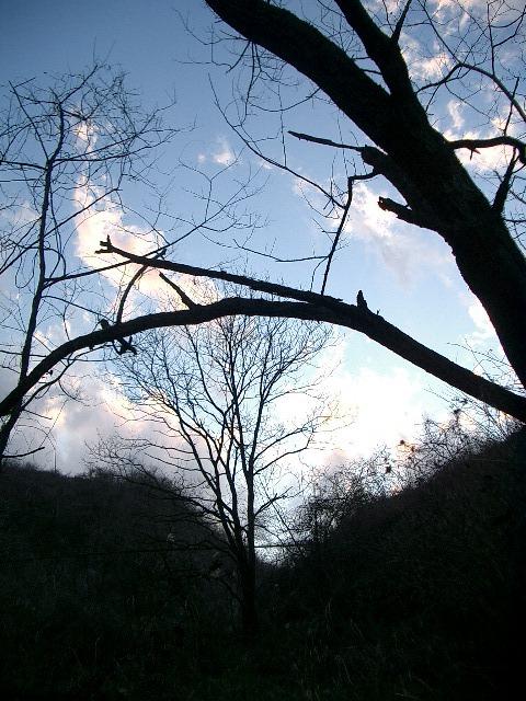 山の冬夕暮れ