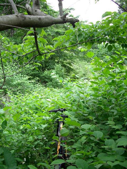 薮の中のトレール