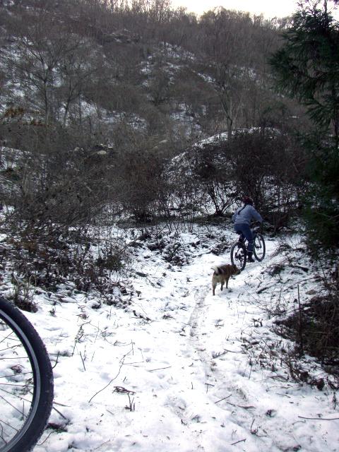 雪の裏山トレール2
