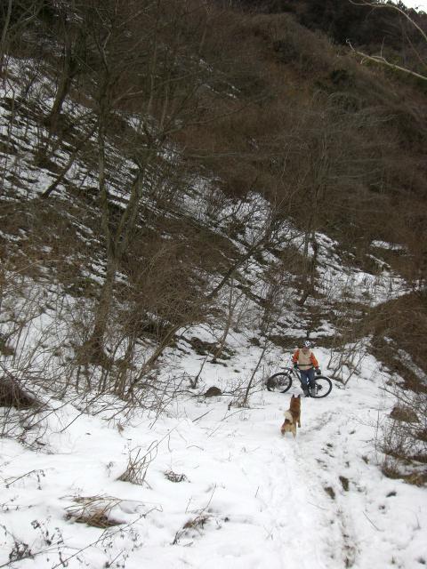雪の裏山トレールへ犬と