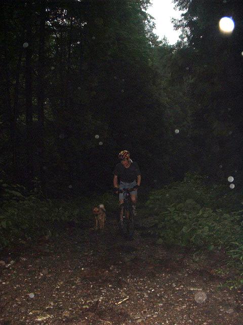 雨の森を行く