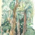 ジャングルの行軍
