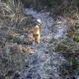 霜の道を行く