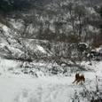 雪のダウンヒル