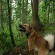 森が大好き