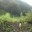 雨が落ちて来た