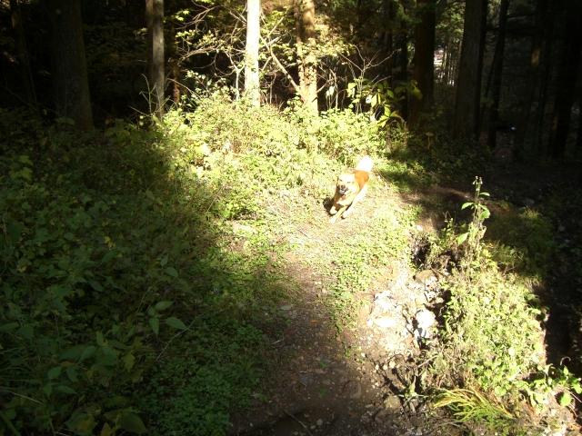 木漏れ日を走る